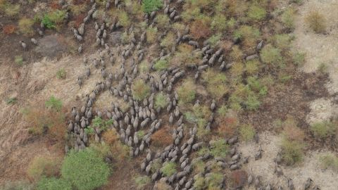 In 2002, an estimated 4,300 elephants lived in Zakouma. A decade later that figure had plummeted by 90 percent.