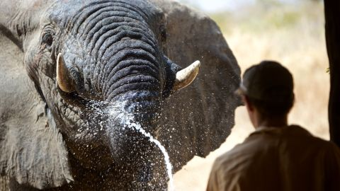 But since the end of 2011, no elephants have been poached in the park -- and no ivory has been taken from the park in five years.