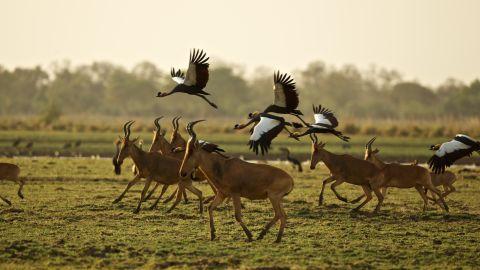 An abundance of antelope species -- including the hartebeest -- roam the 3,000-plus-square-kilometer park today.