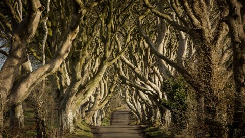 """This avenue of 18th-century beech trees in Stranocum, County Antrim, Northern Ireland, was the setting for a classic scene in """"Game of Thrones"""" season two, when Ayra Stark flees King's Landing disguised as a boy."""