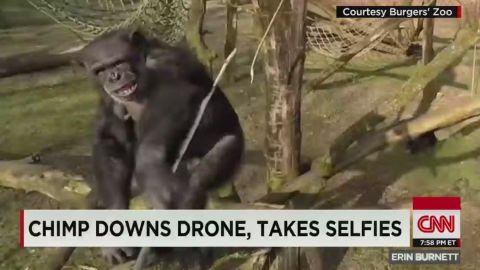 erin pkg moos chimp takes down drone_00000712.jpg