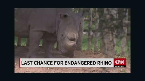 pkg morgan last male white rhino_00000219.jpg