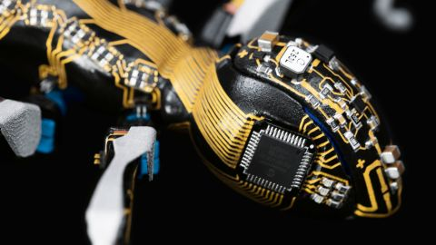 The project mimics nature to find solutions to the problems thrown up by the coordination and logistics necessary to carry out mechanical robotic tasks.