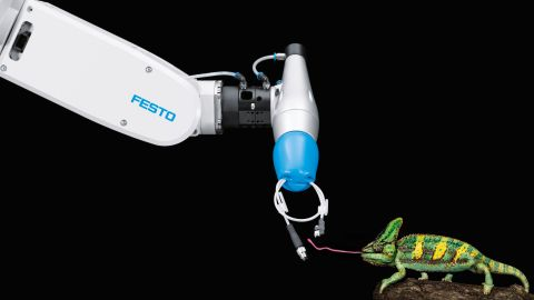 The chameleon-tongue robot -- a liquid-filled rubber gripping device which mimics the grasping abilities of the predatory lizard -- could be used to handle small objects, replacing the finesse of human motor abilities in the workplace.