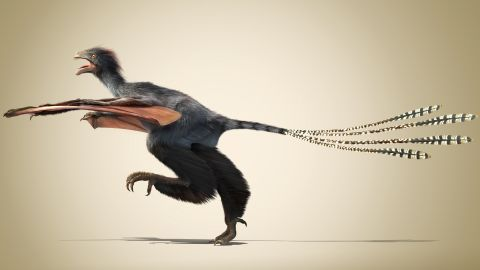 """This <a href=""""http://edition.cnn.com/2015/04/30/asia/china-dinosaur-yi-qi/"""">unusual dinosaur with bat-like wings</a> existed for a very short time 160 million years ago during the Jurassic Period."""