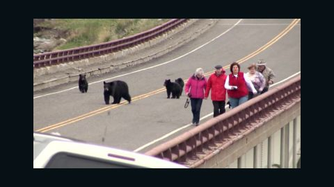 vo bears chase tourists montana_00003323.jpg