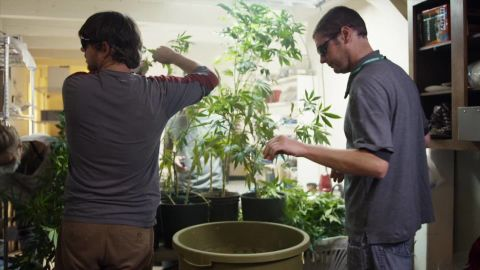 high profits killing plants_00002901.jpg