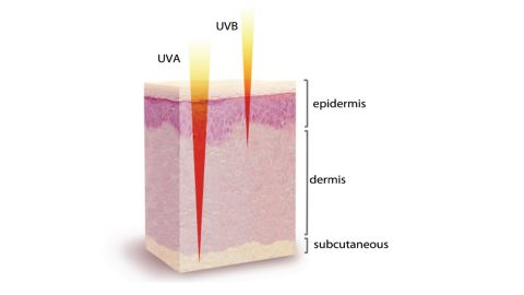 Types of ultraviolet radiation and skin penetration