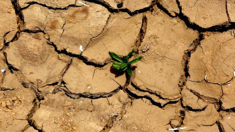 A plant pushes up through dry land in Gauribidanur, India, on May 26.