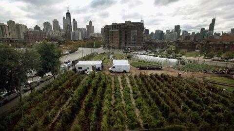 City Farm in Chicago