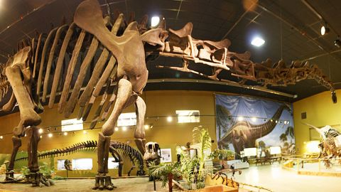 Visitors to the Wyoming Dinosaur Center can spend the day talking to real paleontologists and try digging up bones.
