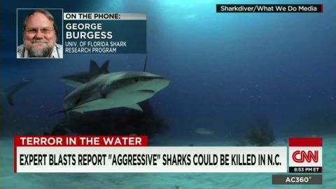response to shark attacks george burgess sot ac_00010326.jpg