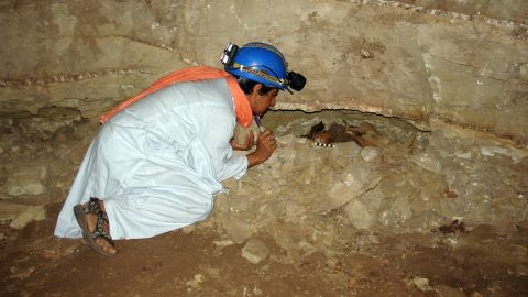 Archaeologist Salima Ikram examines the mummified remains of an adult dog in a wall niche.