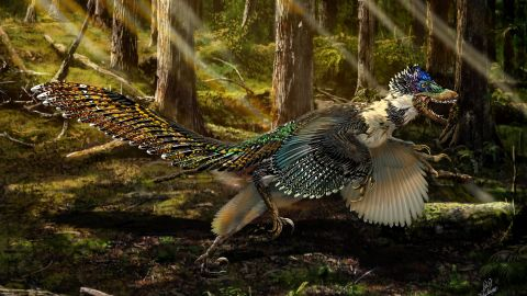 """This mule-sized, four-winged dinosaur <a href=""""http://edition.cnn.com/2015/07/17/asia/china-winged-dinosaur-discovery/"""">was discovered in Liaoning Province</a>. At two-meters high, it's the largest winged dinosaur found but although its short arms have substantial quill like feathers, researchers think it couldn't fly. It was memorably described by one paleontologist as a """"fluffy feathered poodle from hell."""""""