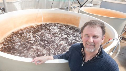 Chris Langdon has been growing and studying dulse at Hatfield Marine Science Center in Newport Oregon for decades and is now working with the Food Innovation Center in Portland on creating healthy and appealing dishes.