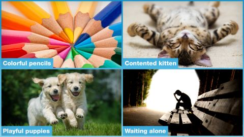 """<br />A:  If you picked the kitten or pup, your brain may be wired to be happy. <a href=""""http://scan.oxfordjournals.org/content/9/6/760"""" target=""""_blank"""" target=""""_blank"""">Studies</a> show that people who have happy brains respond more to positive things than negative or neutral ones."""