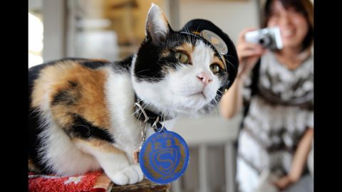 """Tama, a Japanese cat, became celebrated as the friendly stationmaster of the Kishi rail station in Kinokawa -- part of a railway line that she helped save from shutting down, thanks to her popularity, which brought in millions of dollars. Tama died on June 22 at the age of 16. Her funeral <a href=""""http://www.theguardian.com/world/2015/jun/29/tama-the-cat-3000-attend-elaborate-funeral-for-japans-feline-stationmaster"""" target=""""_blank"""" target=""""_blank"""">was attended by 3,000 people</a>."""