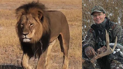 American dentist Walter Palmer was vilified online after it emerged he was the hunter behind the killing of Cecil the lion in Zimbabwe. Twitter users called for him to be shot and skinned after the famous lion was found dead after an alleged 40-hour hunt.