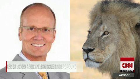 dentist faces backlash after killing lion young ac_00000110.jpg