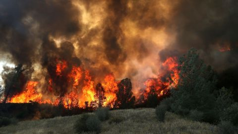 Flames from a backfire operation burn through a grove of trees as firefighters try to head off the Rocky Fire on Monday, August 3, near Clearlake, California.