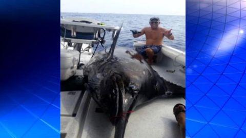 Blue Marlin caught Hawaii_00002913.jpg