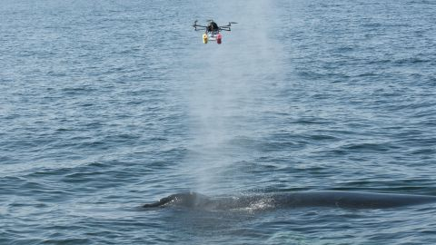 Researchers from the Woods Hole Oceanographic Institution and the National Oceanic and Atmospheric Administration use a hexacopter -- a six-winged camera-loaded drone -- to monitor whales off the coast of New England in July.  Acquired under National Marine Fisheries Service Permit 17355-01 and NOAA Class G flight authorization 2015-ESA-4-NOAA; Photo by John Durban, Southwest Fisheries Science Center, NMFS, NOAA; and Michael Moore, Woods Hole Oceanographic Institution.