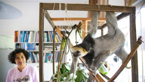 Pool has been recognized for her particular interest in three-toed and two-toed sloths.