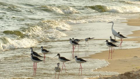 """Entebbe is expected to welcome just under half a million visitors in 2015. Birds enjoy the water on Lido Beach, Entebbe. <br /><br /><a href=""""https://www.cnn.com/2015/03/17/africa/africas-top-ten-cities-for-investors/index.html"""" target=""""_blank""""><strong>Top 10: Africa's 'Cities of Opportunity' revealed</strong></a>"""