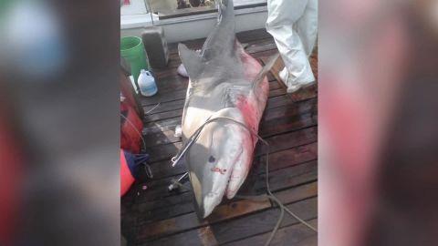 fisherman 14 foot tiger shark sc dnt_00003007.jpg