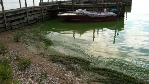 Algal bloom in Lake Erie, Kelley's Island. October 16, 2011. Photo: T. Joyce, NOAA.