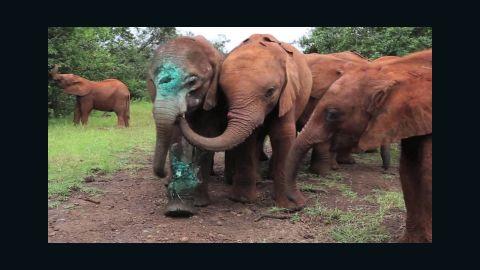baby elephant simotua survives poachers_00014210.jpg