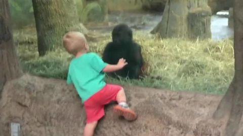 gorilla plays peekaboo kid newday _00000715.jpg