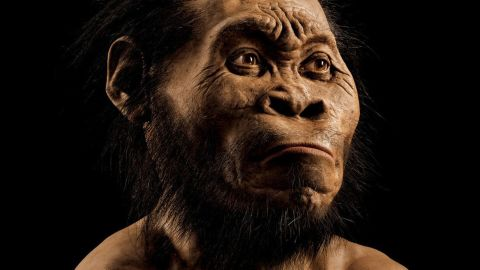 A reconstruction of Homo naledi's head by paleoartist John Gurche, who spent some 700 hours recreating the head from bone scans. The find was announced by the University of the Witwatersrand, the National Geographic Society and the South African National Research Foundation, and the image will appear in the October issue of National Geographic magazine.