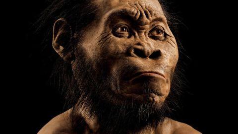 Homo naledi, as reconstructued by paleoartist John Gurche.