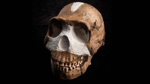 """""""Overall, Homo naledi looks like one of the most primitive members of our genus, but it also has some surprisingly human-like features, enough to warrant placing it in the genus Homo,"""" said John Hawks of the University of Wisconsin-Madison."""