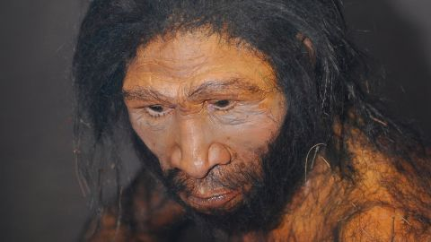 An artist's rendition of Homo erectus.