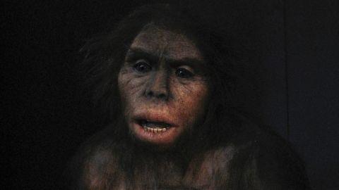 A rendering of Homo habilis.