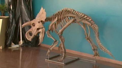 colorado new dinosaur species unveiled pkg_00013422.jpg
