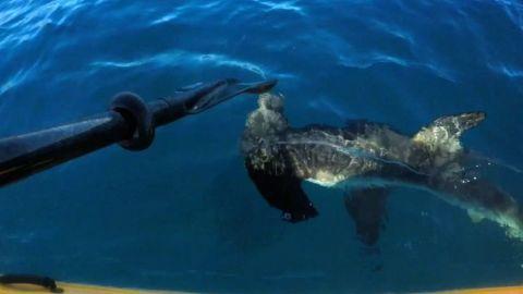 Kayaker fights hammerhead shark video pkg_00000000.jpg
