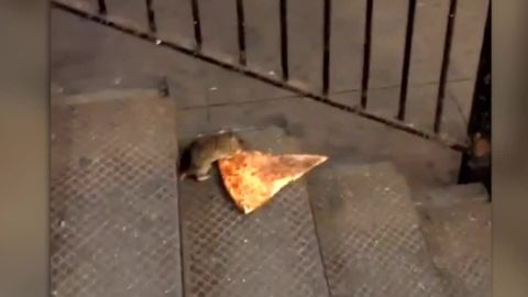 """A hungry varmint nicknamed Pizza Rat captivated our hearts this summer with his determination to make off with a slice bigger than himself. It's one of those meme-worthy moments that makes for a great Halloween costume idea. Wear your best gray sweatsuit, slap on a rat nose from Party City and swipe a slice of pie from the party table, perhaps carrying it in your new <a href=""""http://time.com/4056307/portable-pizza-pouch/"""" target=""""_blank"""" target=""""_blank"""">portable pizza pouch</a>. Voila!"""