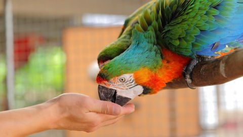 W61.12XA Struck by macaw, initial encounter