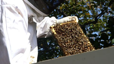 White House beekeeper Charlie Brandts shows off some of the roughly 35,000 bees living on the White House lawn.