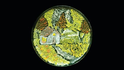 """""""Harvest Season"""" is a creation by Maria Eugenia from India.  She used a species of yeast to depict an image of a farmhouse in the fields."""