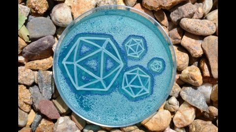 A combination of yeast and viruses are harvested to create a zenful petri art dish.