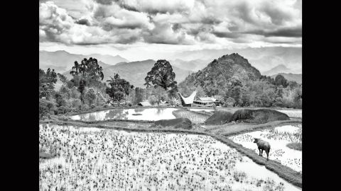 """A coffee field is pictured in 2014 around the Toraja mountain area of Indonesia's  Sulawesi Island. """"It is perhaps an odd thing for a Brazilian to admit, but I never drink coffee. And yet it runs through my veins,"""" Salgado wrote in his book."""