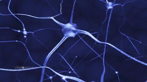 spc vital signs concussion b_00022105.jpg