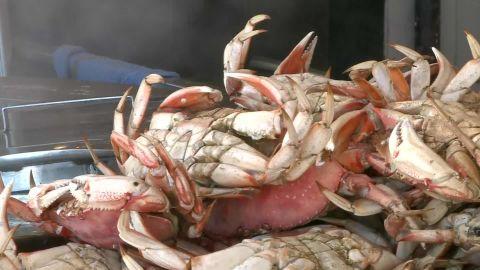 toxic algae threatens crab season pkg _00010802.jpg