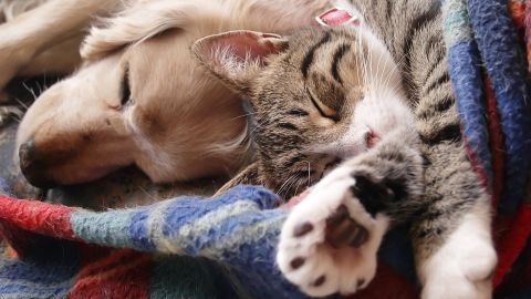 Cats and dogs can both spread parasites to their owners.