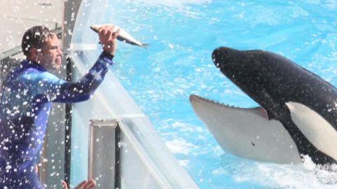 SeaWorld Blackfish killer whale show Howard Garrett nr_00023125.jpg