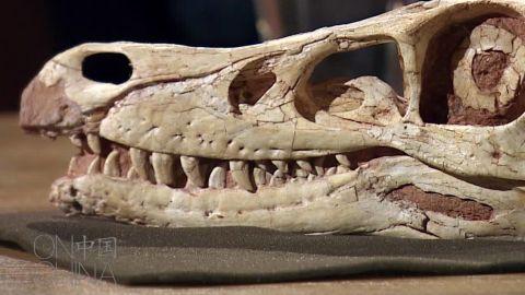 on china dino fossil lu stout_00001027.jpg